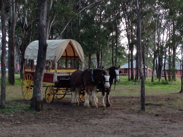 Horse Drawn Carriages in the Hunter Valley